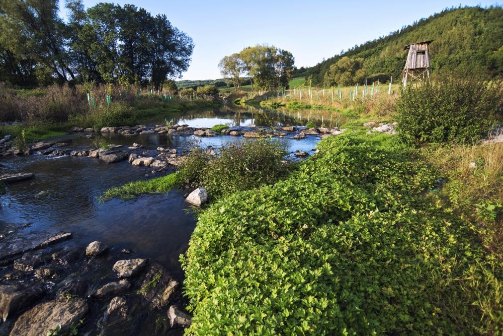 Revitalizace vodního toku