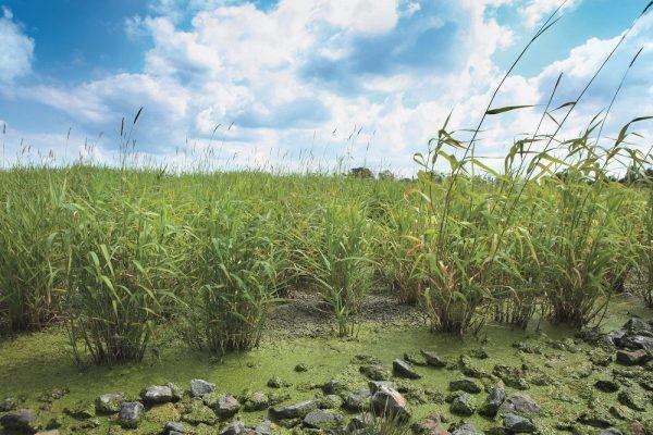 Kořenová čistírna odpadních vod v obci Cep v chráněné krajinné oblasti Třeboňsko – vybudování kořenové ČOV, fungující na stejných principech jako přirozené mokřady.