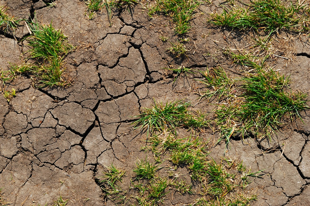 Vyschlá půda