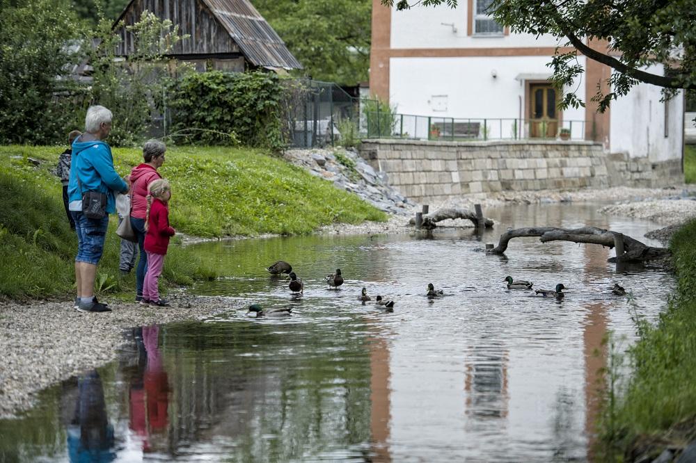 OPŽP_PO4_Revitalizace ramene drobného vodního toku v Chrudimi_5